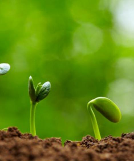 Specific growth regulators