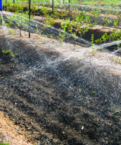 WATER SOULBE NPK FOLIAR and DRIP FERTILIZERS