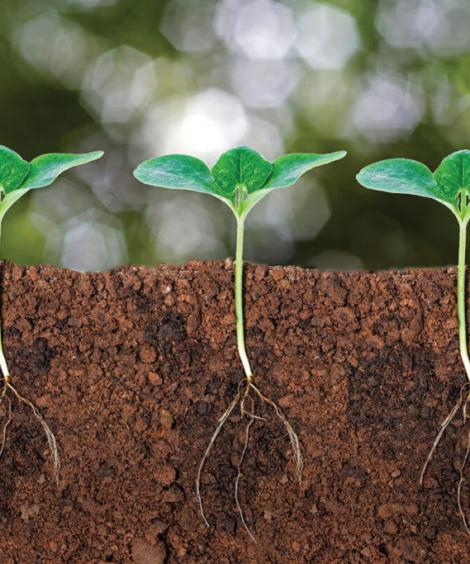 Soil Correctors